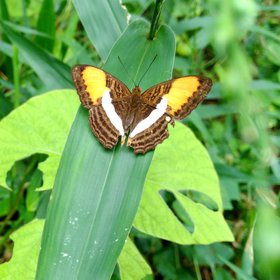 Butterfly in the Amazon