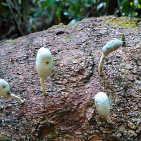 Tree fungus in the rainforest