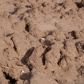 Microbarkhans dunes in a ploughed soil