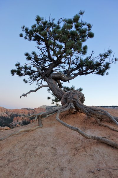 Hanging on in Bryce Canyon