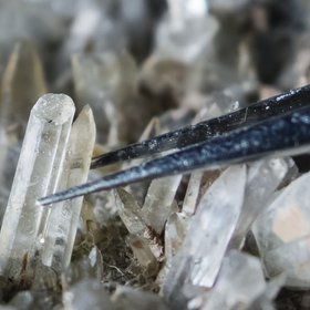 Calcite crystals of microbial origin