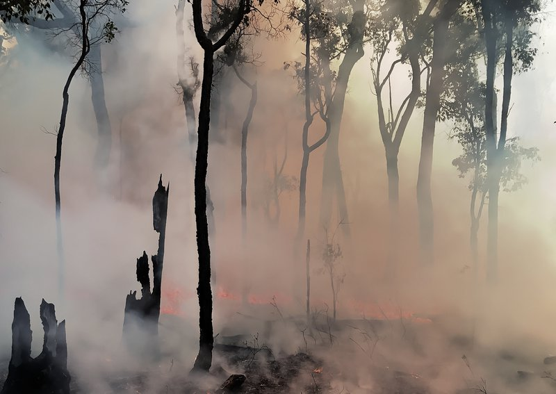 Smoke clears after an experimental wildfire in Australian eucalyptus forest