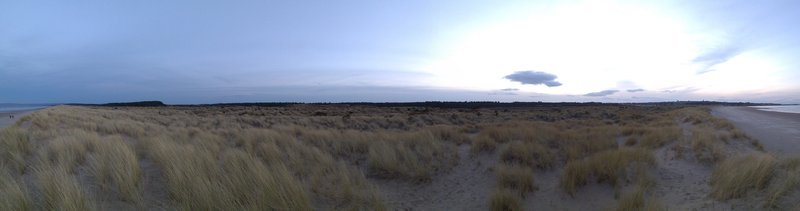 Sand-loving grass in the evening