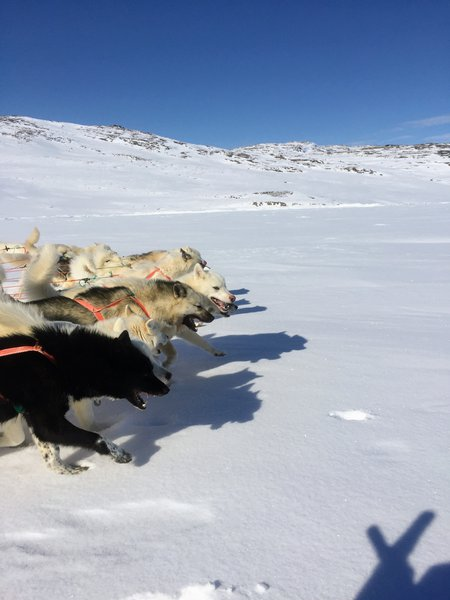 Dog sledging tour through the eternal? ice of Greenland