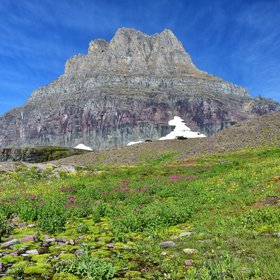 Summer growth at Logan Pass