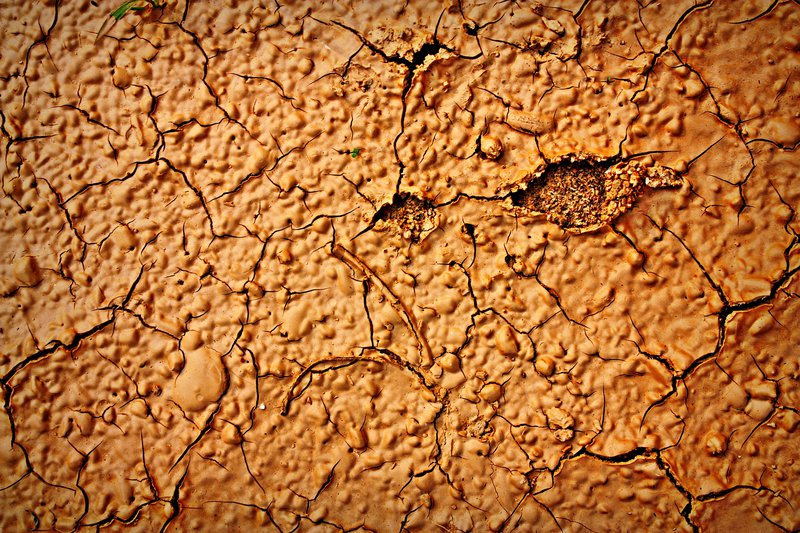 Mud cracks on a clay soil after a rainy day