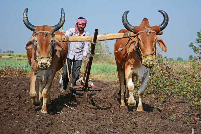 Ploughing through fertile but challenging ground