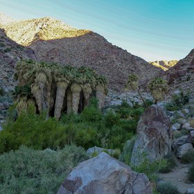Oasis in Anza-Borrego Desert State Park