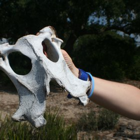White mask found on the soil surface