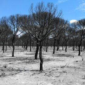 Dead landscape after a wildfire in Doñana National Park (SE Spain)