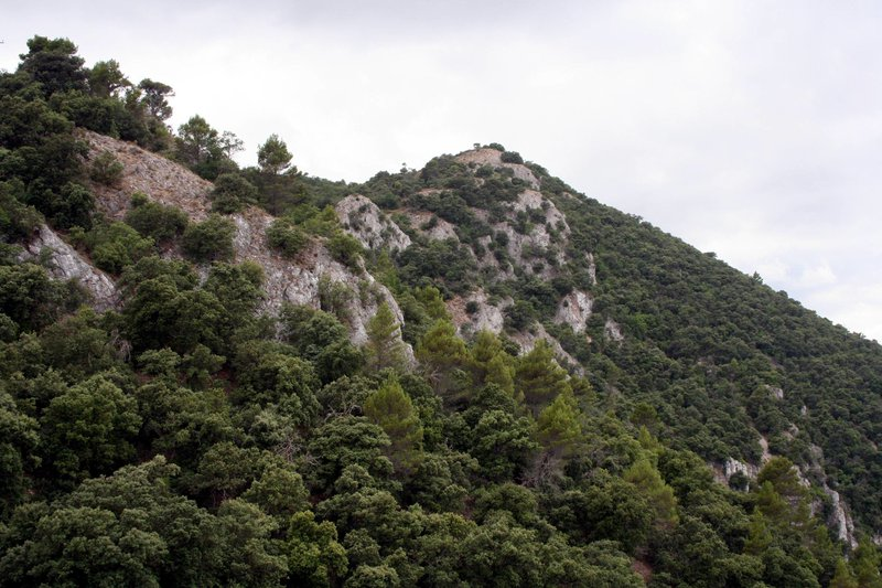 Mixed pine and oak forest on limestone crags
