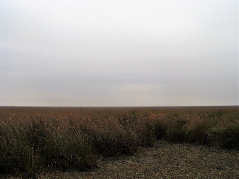 Shrubs on a Gleyic Fluvisol developed from aluvial sediments in P.N. de Doñana (SW Spain)