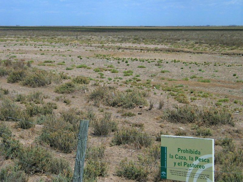 Micro-scale changes in vegetation after small changes in salinity (N.P. Doñana, SW Spain)