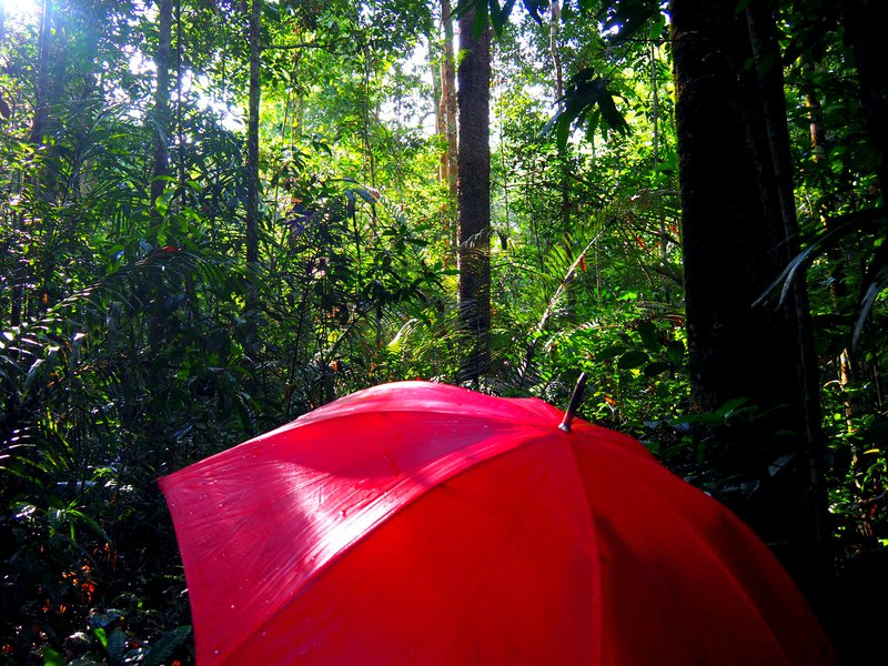 Working in the humid tropics