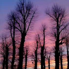 Bare trees in a colorful sunset
