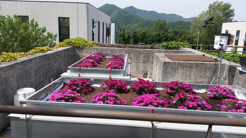Green roofs between science and nature