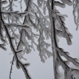 Frozen trees during winter of 2019