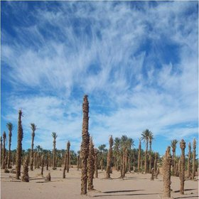 The Palm Cemetery in Middle Draa