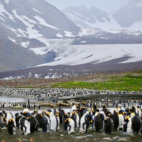 The Retreating Glaciers behind Half a Million Penguins