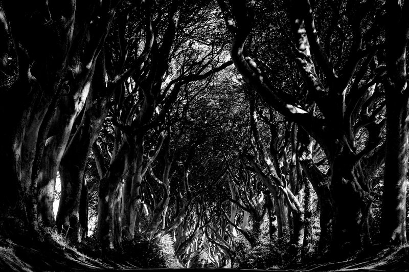 The Graceful Antiquity of the Dark Hedges