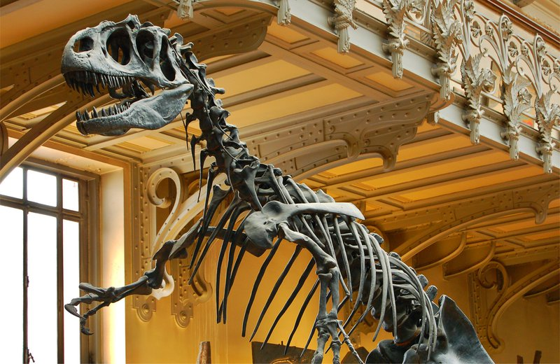 Allosaurus at the Paris Museum of Natural History