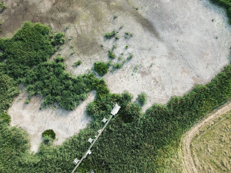 Summer drought 2018: Rewetted peatland in need of some wetness