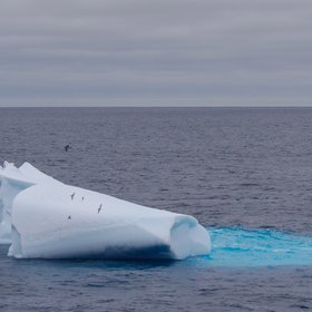 Old Iceberg as habitat