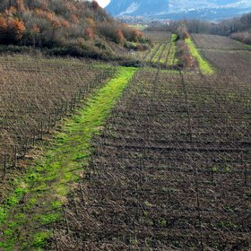 """Looking for good wine..in """" faulted vineyard"""""""