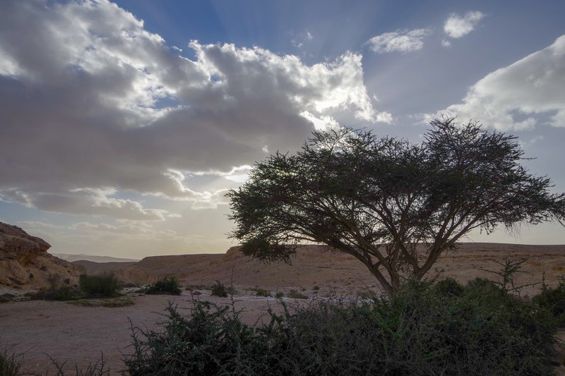 Peace and life thriving in the Negev