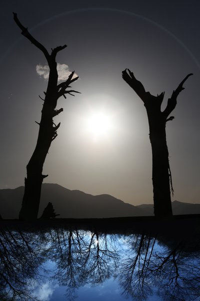 Shadow in the river, young and old trees, frindship between past and present generation,protect earth
