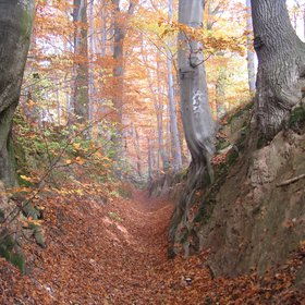 Loessic ravine rimmed with beech trees