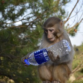 A Primate Studying the Anthropocene