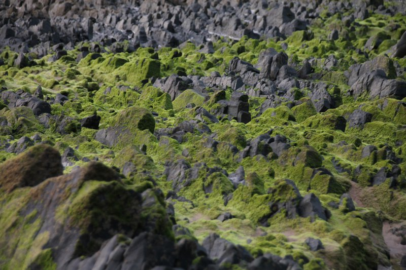 Into the mossy mountains