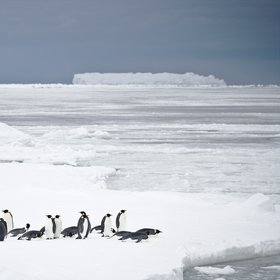 Emperor penguins, Weddell Sea