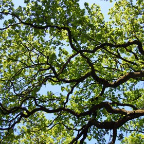 Life branches - tree elegance and harmony