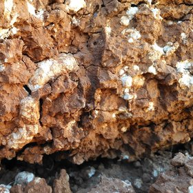 Calcium carbonate concretions in a soil horizon