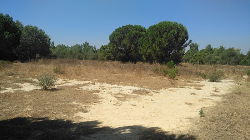 Experimental plot preserving unaltered toxic sludge in the proximity of the Doñana National Park