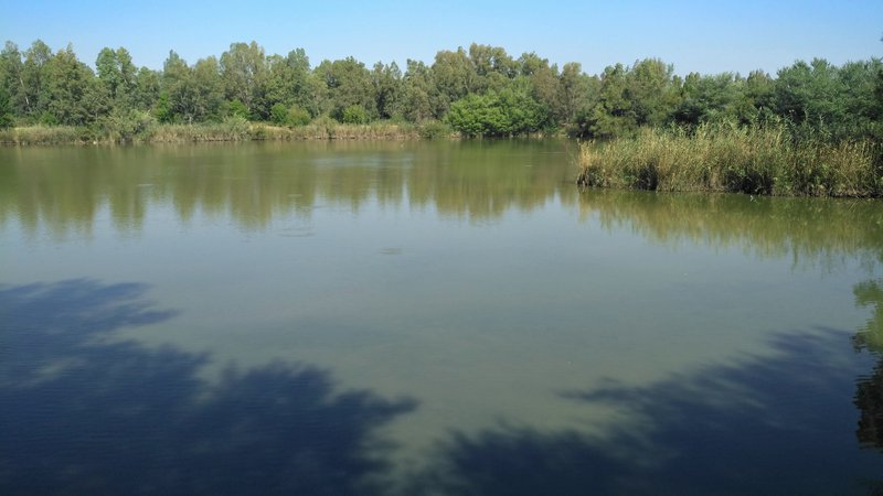 Artificial lagoon on an old restored gravel in the Green Corridor of Guadiamar, near the Doñana National Park
