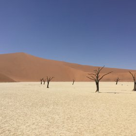 White sand and withered tree in Sossusvlei