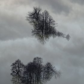 Reflections in floodwater