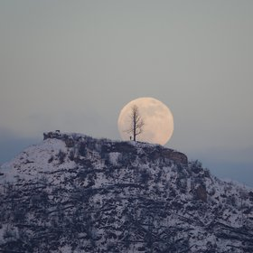Fullmoon rise over the lonely tree on the hill