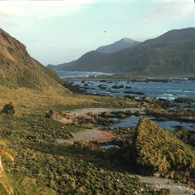 Coast of Macquarie Island, 1959