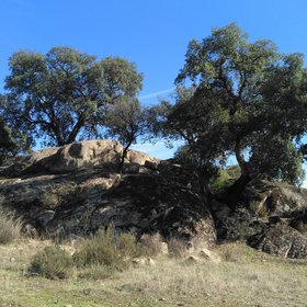 Granite outcrops in El Berrocal forest area (Seville, Spain)