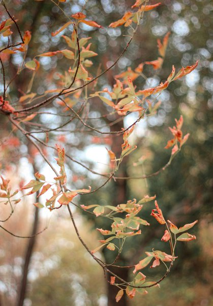 The Unjustly Gripping Bokeh of Autumn