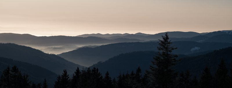 Shades of the Black Forest