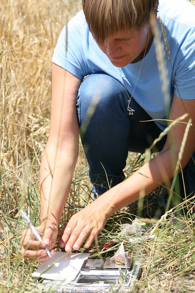 Measuring Tea Bag Index in the field